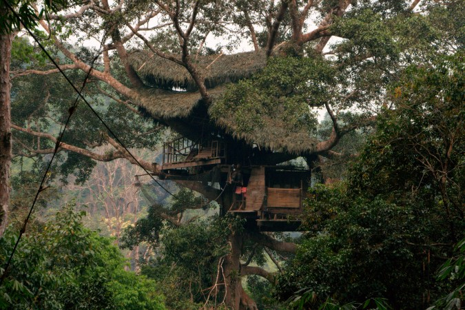 Design the ultimate tree house.