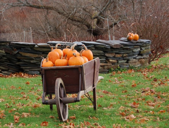 List the top seven free things to do in the fall.