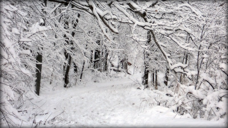 What are the top ten things to do on a snowy day?
