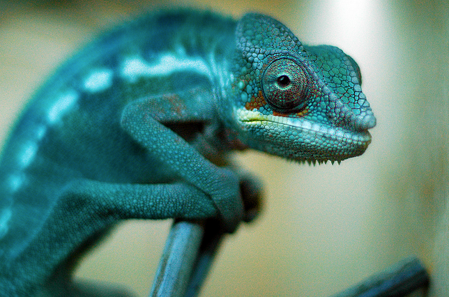 What are the pros/cons to being a chameleon (or having chameleon-like powers)?
