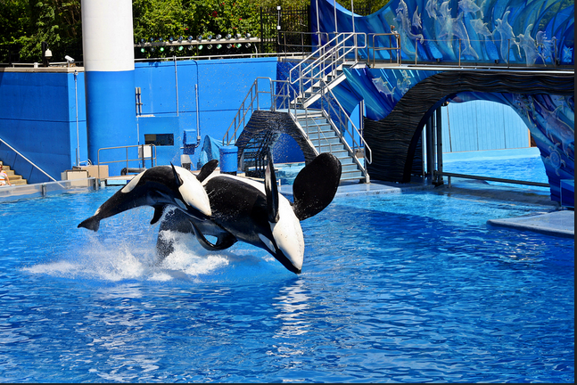 Is Seaworld helping or hurting orcas? Make your case.