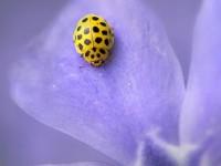 beautybug