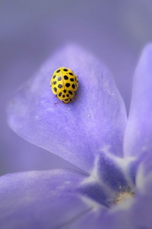 Everyone seems to favor the red ladybug. Write something expressing why differences are beautiful.