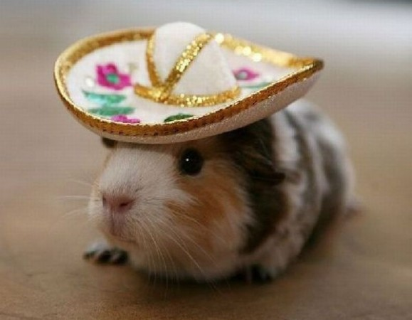 Write a poem, scene, or story using this guinea pig as your main character.