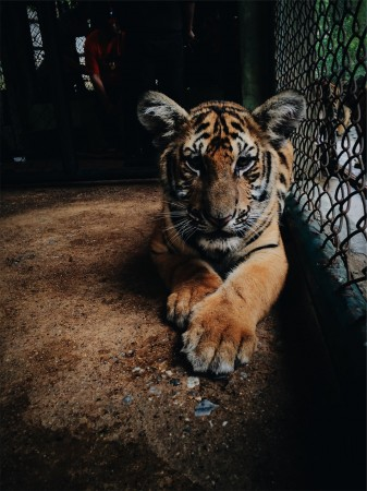 What are the pros and cons of zoos?