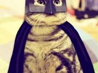 1424895970_bat-cat