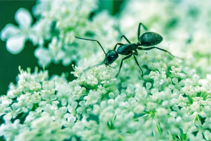 """Begin with, """"So it turns out ants are actually aliens colonizing our planet."""""""