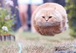 New Species of Cat…