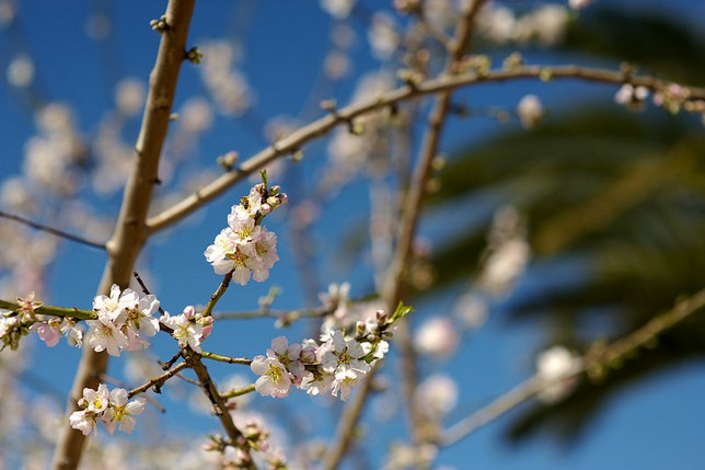 Of all of the trees that begin to bud in the spring, which is the one you like most? Why?