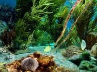 1024px-Kleine_Bonaire-Underwater_lifejs