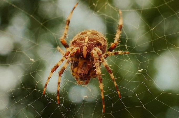 Write 3 very short stories. Each story must include a spider, but in different ways.