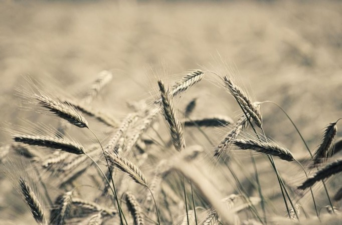 Gluten: is it really bad for you?