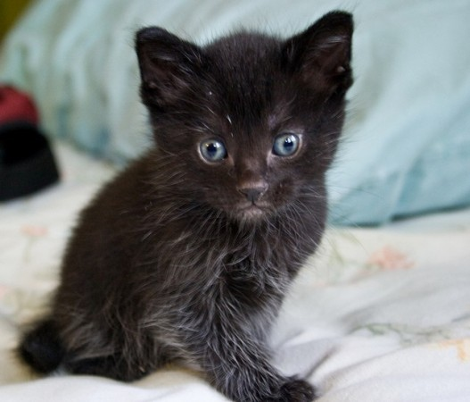 You think you've found an abandoned kitten. Turns out, it's a baby werewolf…