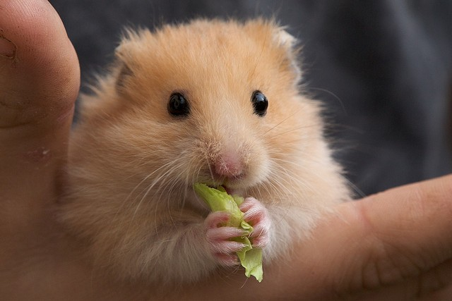 Give this hamster a name. What kind of personality does it have?