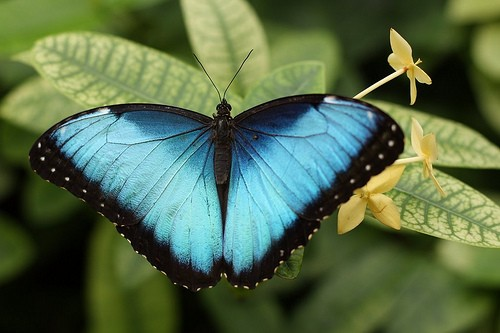 How do you think butterflies got their name?