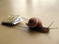 1444231210_snail