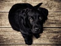 1446482982_puppy-love
