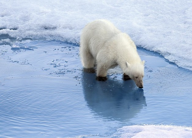 Devise a plan to help save Polar Bears from losing their habitat.