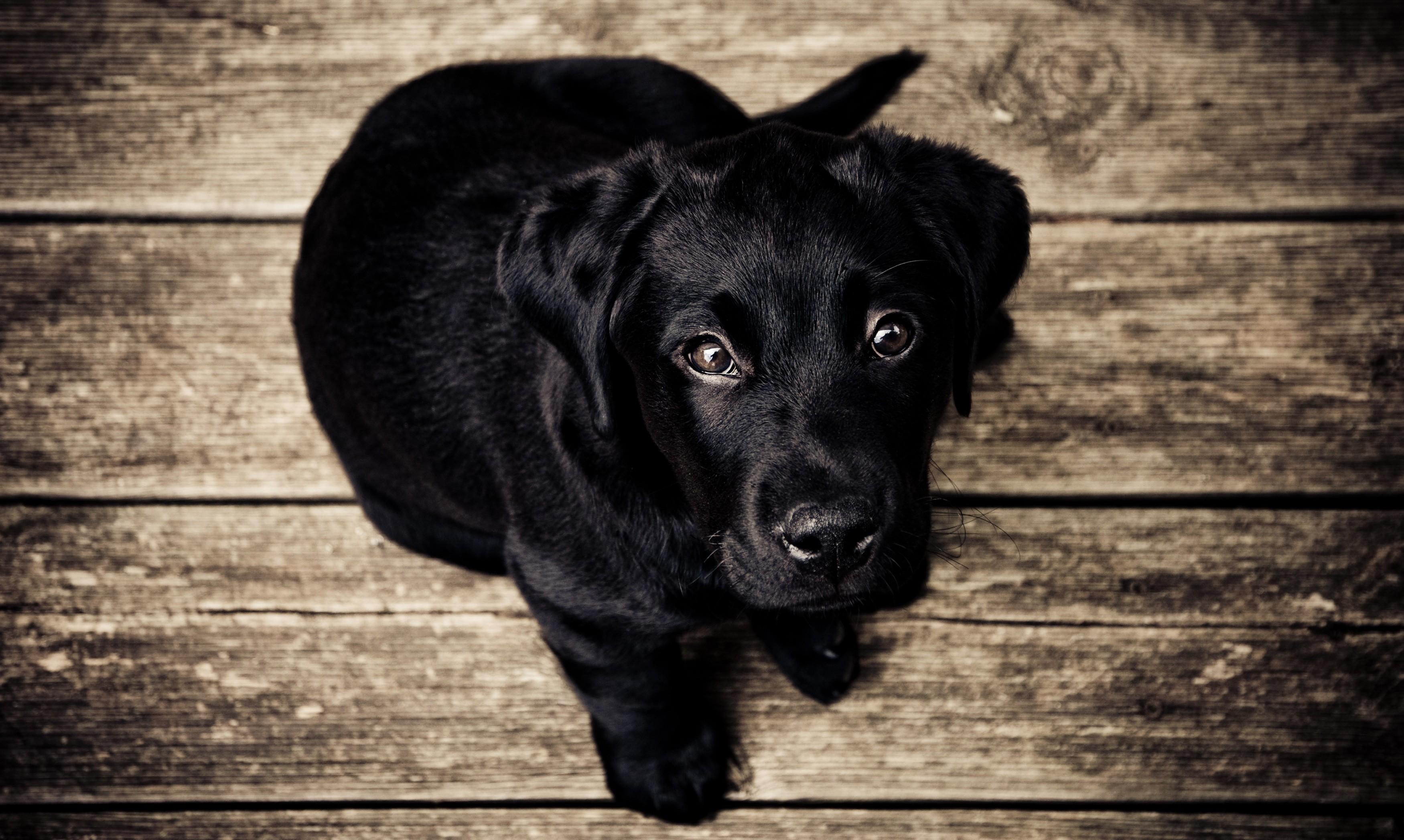 1453482184_puppy-love