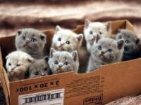 1455905460_kittens