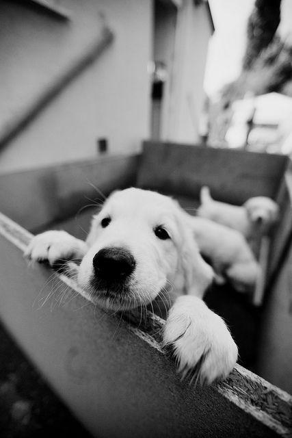 1456427757_puppy