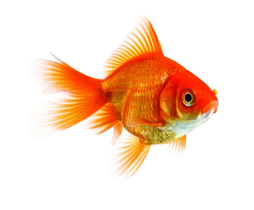 Do fish have feelings? Explain why.