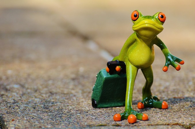 Based on what you know about frogs, where would one be most likely to vacation? Why?