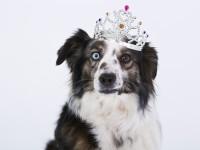 dog-1273056_1280