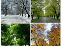 1460045608_327239_by_twylatate_seasons