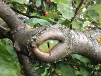 1460396513_tree-eye