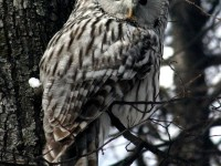 owl-855706_1280