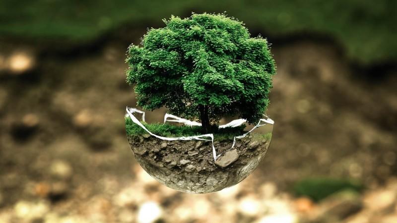 Write an ode to a tree.