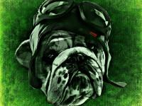 dog-1235247_1280