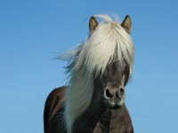 horse-1330690_1920