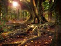 treehouse-1308108_1920