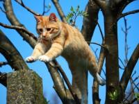cat-1366118_1920