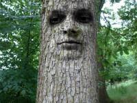tree-1519868_1920
