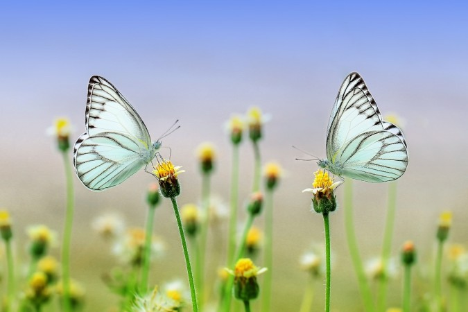 Create a dialogue between these two butterflies. Challenge: record it with the audio feature.
