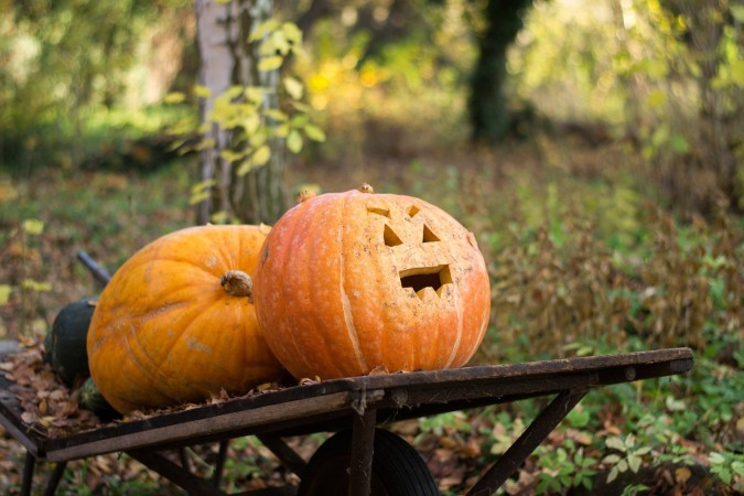 """Create a Campaign for """"People for the Ethical Treatment of Pumpkins"""""""