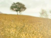 1474296524_yellow