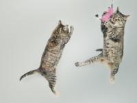 1474987430_cats