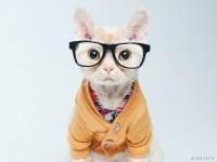 1475076167_cat