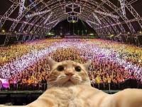 Cat at concert