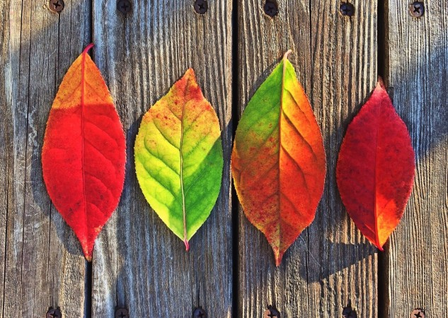 Write a poem about fall leaves.