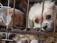 animal-abuse-steve-dale