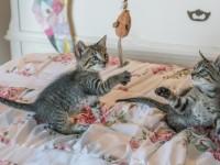 kittens-1534083_1920
