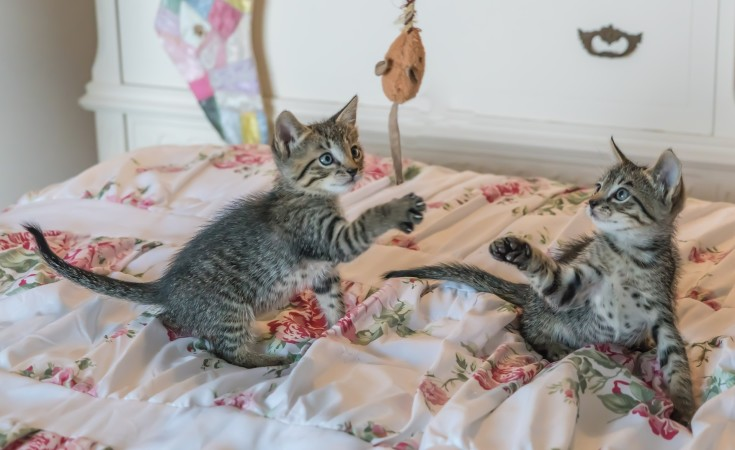 Tell a story about playing with the kittens.