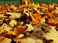 leaves-1818628_1920