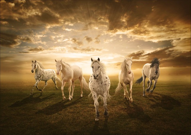 3d-Beautiful-White-Horse-Wallpaper-05