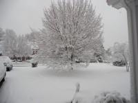 Snow in Yard 12.26.10